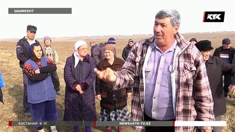Шымкентский чиновник открестился от коней, которые вытаптывают местные поля