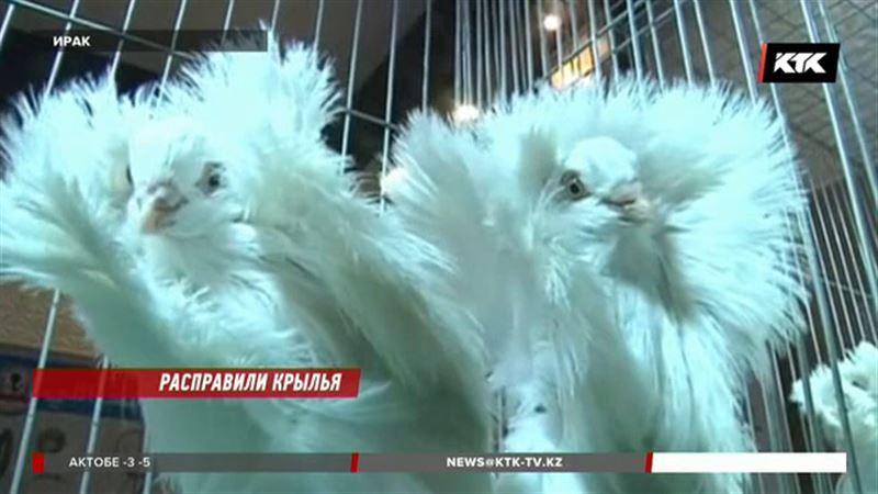 Есть и конкурс красоты среди голубей