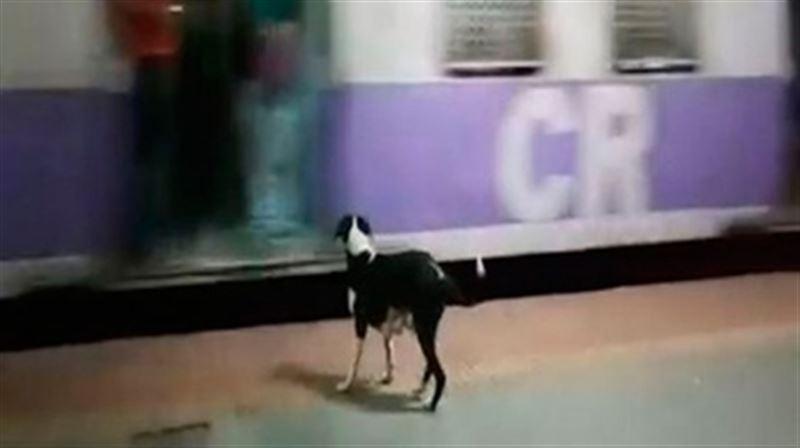 «Индийский Хатико»: Собака каждый день приходит встречать один и тот же поезд на вокзале