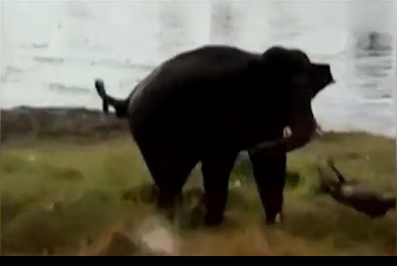 В Индии фермера насмерть забил бивнями разъяренный слон