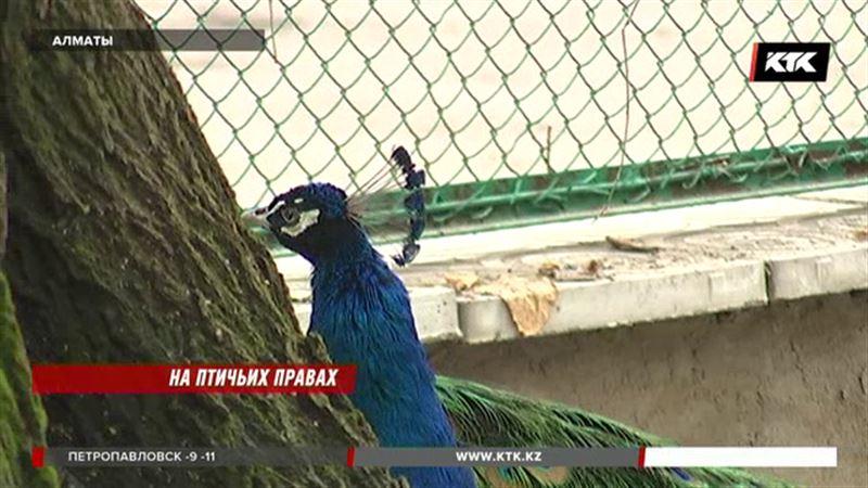 Зоопарк Алматы выпустит животных из вольеров
