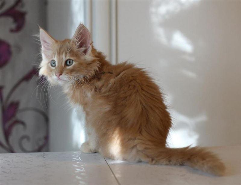 Видео с котом, вылезающим из вентиляционного люка, стало вирусным