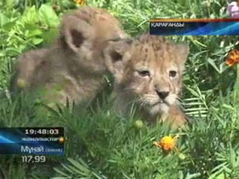 Настоящий беби-бум переживает Карагандинский зоопарк