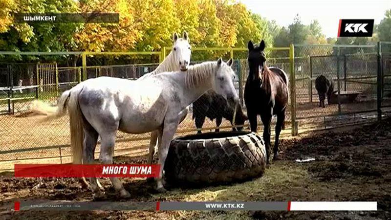 Экс-сотрудники зоопарка в Шымкенте заявили о массовой гибели животных