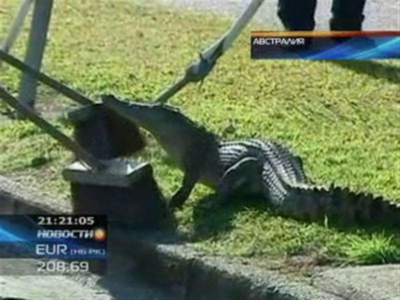 В австралийском городе Кэрнсе крокодил выполз прямо на шоссе