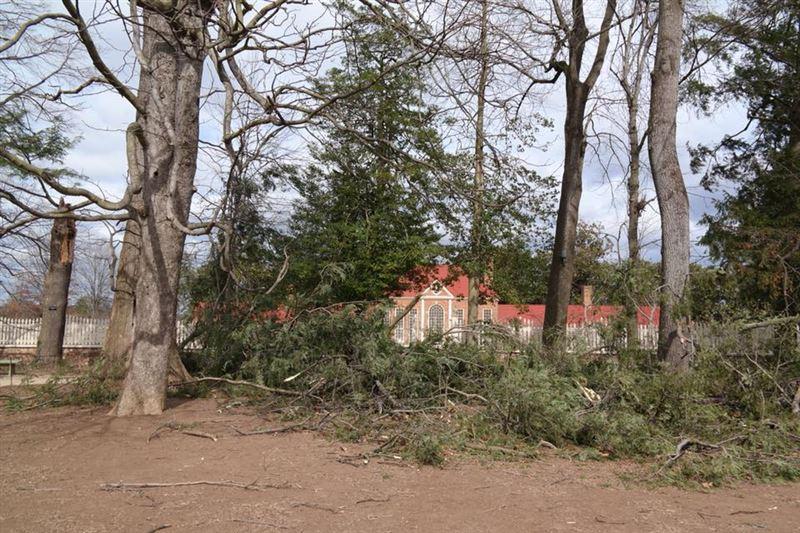 227-летнее дерево, посаженное Вашингтоном, оказалось повалено ураганом