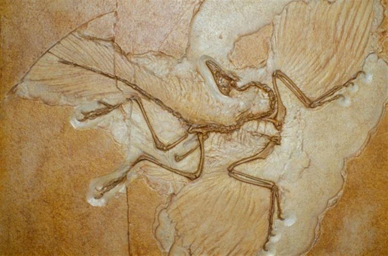 Палеонтологи обнаружили окаменелости одного из первых птенцов на Земле