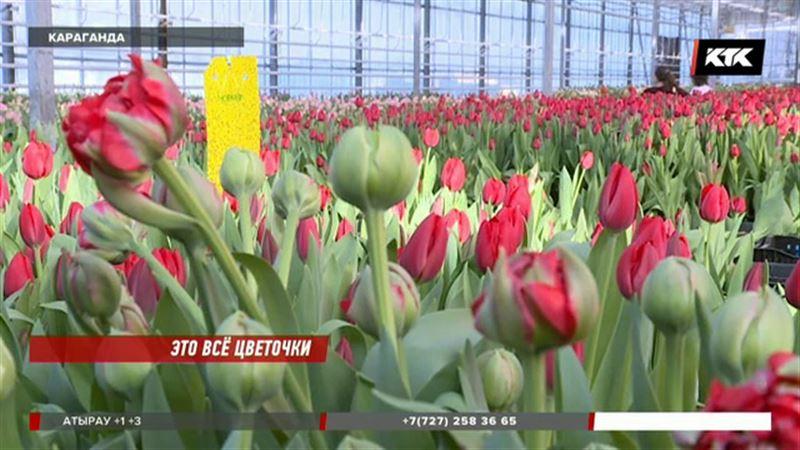 В Караганде к празднику вырастили пионовидные тюльпаны