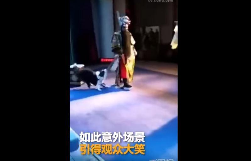 В Китае во время спектакля собака набросилась на актера, едва не сорвав оперу