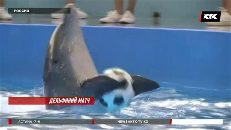 Сочинские дельфины готовятся к чемпионату мира по футболу