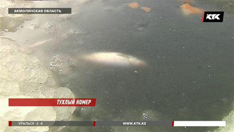 Причины массовой гибели рыбы близ Астаны выясняют экологи