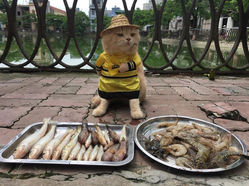 Торгующий рыбой кот Чо покорил сердца пользователей Instagram