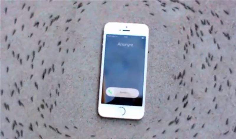Ползающие вокруг iPhone муравьи смутили пользователей Сети