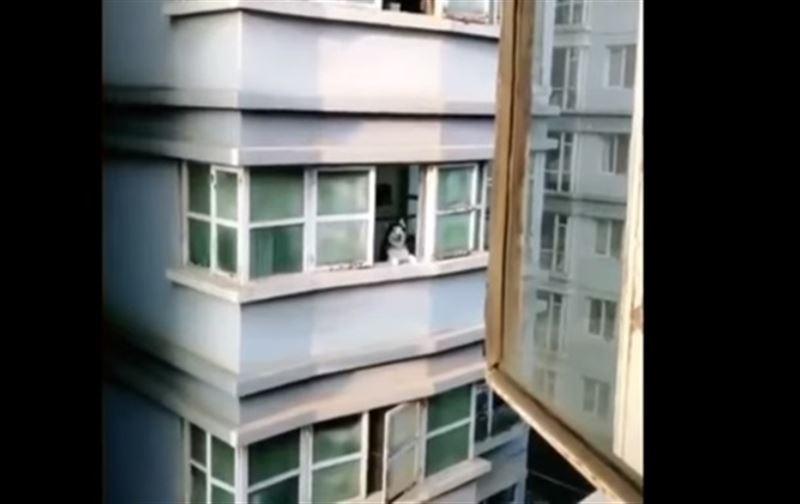 Мужчина изобразил собачий вой, и на него откликнулся соседский пес
