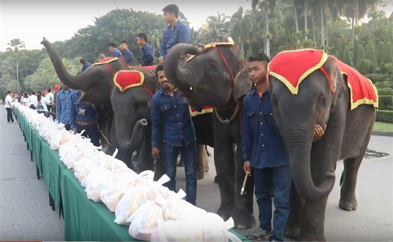 «День слонов» празднуют в Таиланде