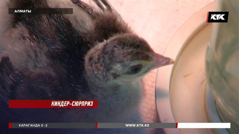 Инновации повысили птичью рождаемость в зоопарке Алматы