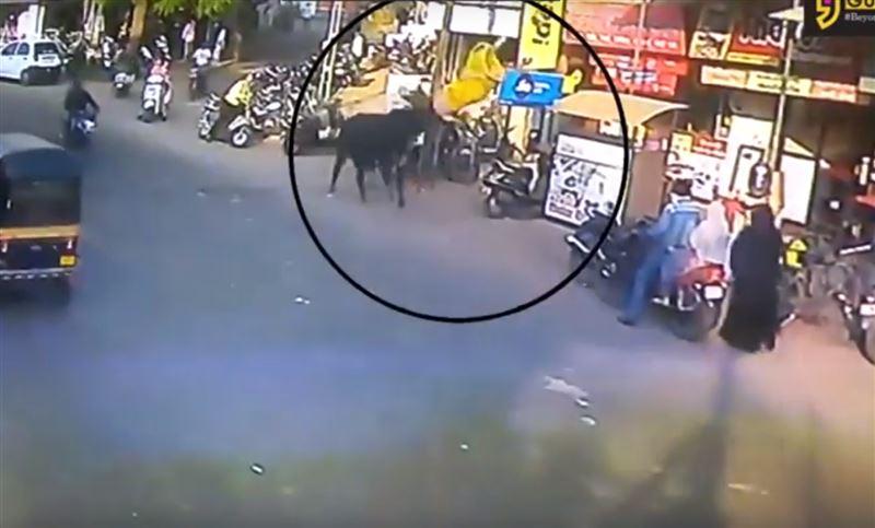 Бык внезапно атаковал девушку на одной из улиц Индии