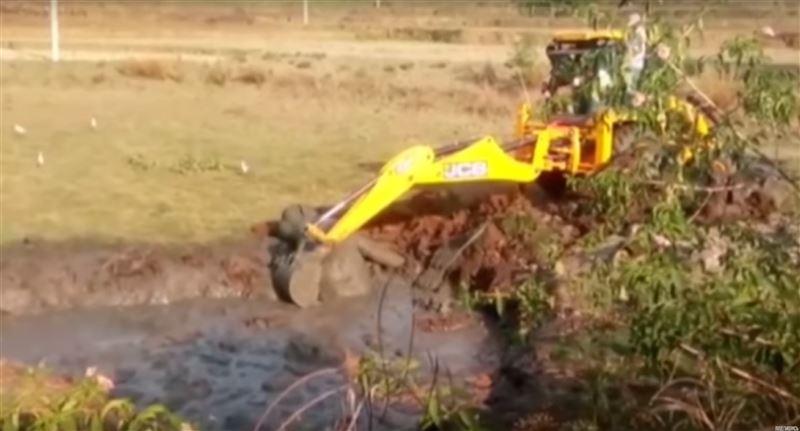 ВИДЕО: Слоненка вытащили из грязевой ямы при помощи ковша экскаватора