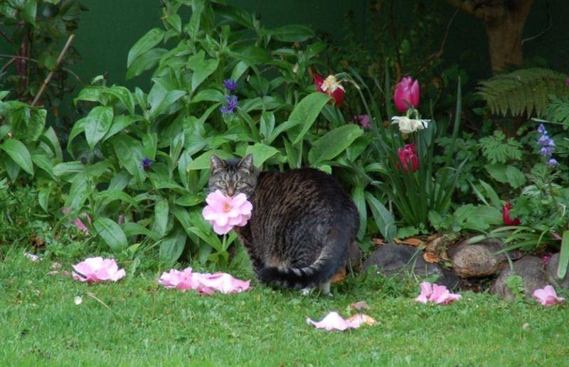 Упитанная кошка вместо мышей приносит хозяйке цветы