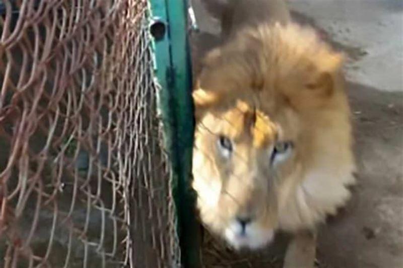 ФОТО: Зообақ қызметшісі үлкен қателік жасады