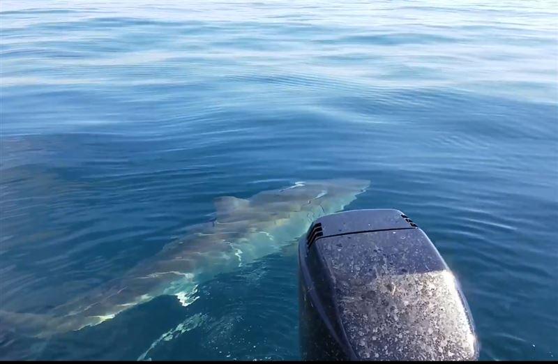 ВИДЕО: Большая белая акула испортила американцам рыбалку