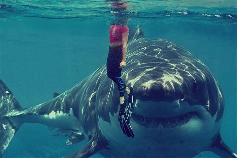Жүре алатын акула бар екен