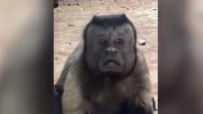 В Китае обнаружена обезьянка с человеческим лицом