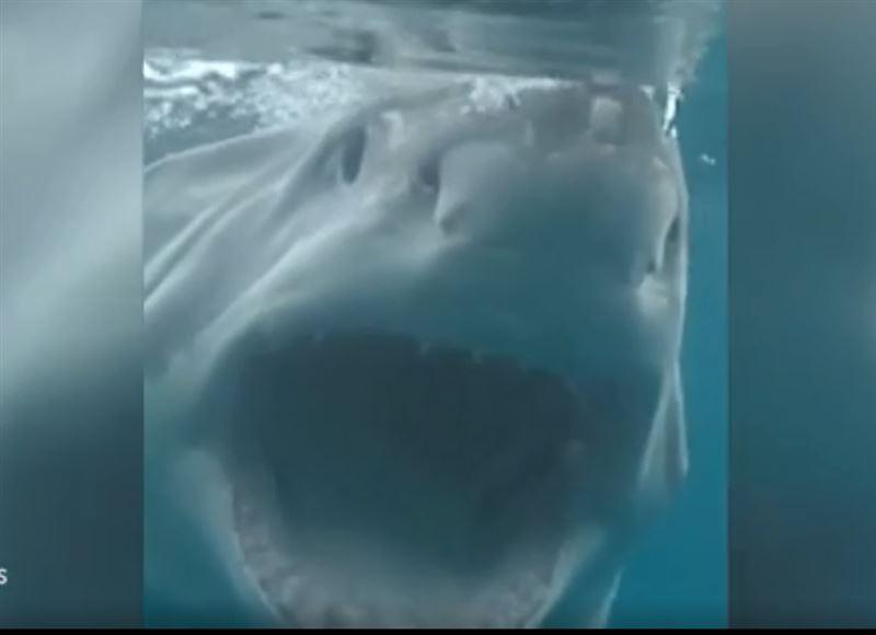 Фотограф, поверявший ногу после встречи с акулой, опять едва не погиб