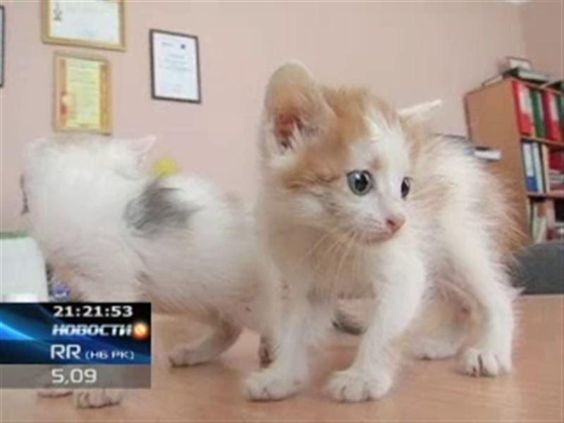 Актюбинским защитникам животных подбросили полтора десятка бездомных котят