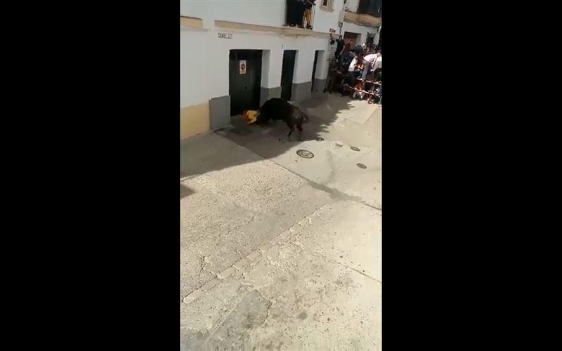 ШОК (18+): Бык насмерть забодал человека во время энсьерро