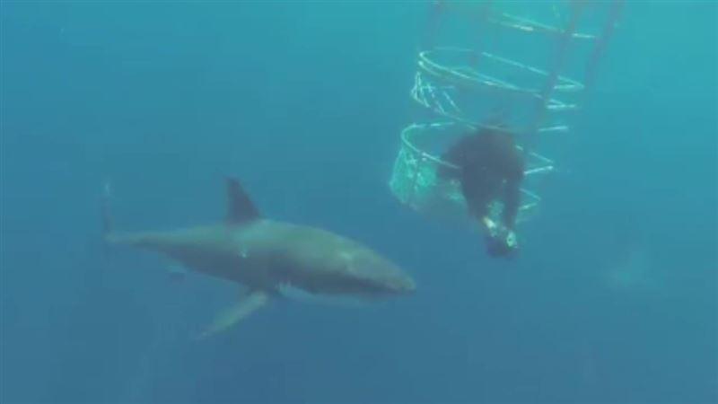 ВИДЕО: На Гавайях акула напала на серфера