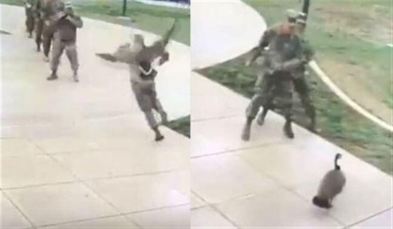 Гусь напал на американских солдат в Оклахоме