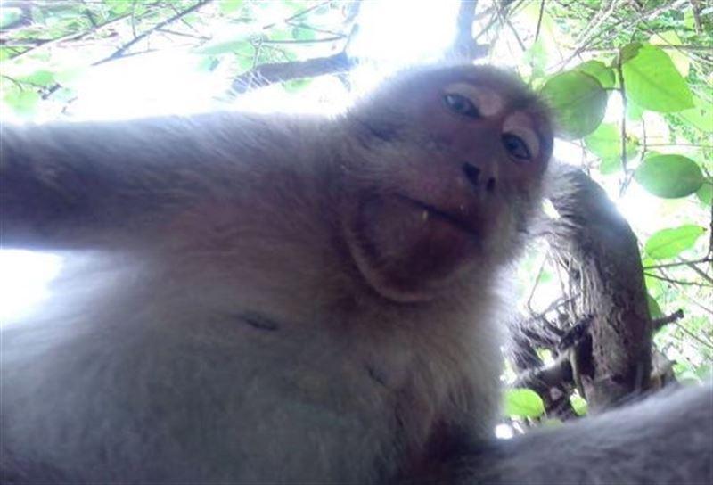 В Индии полиция ищет обезьяну, похитившую ребенка