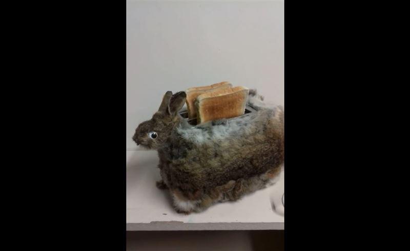 Из мертвого кролика таксидермист изготовил тостер