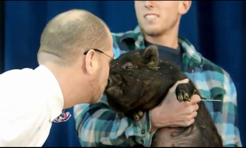 Директор школы проспорил ученикам и поцеловал свинью