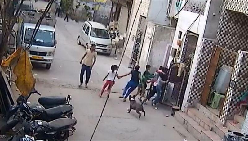 Шокирующее видео: Домашний питбуль набросился на детей