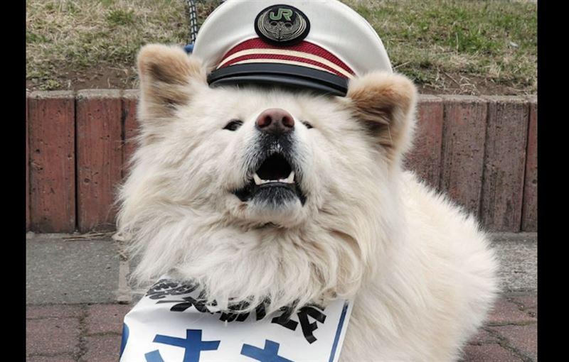 В Японии обязанности начальника железнодорожного вокзала выполняет бездомный пес