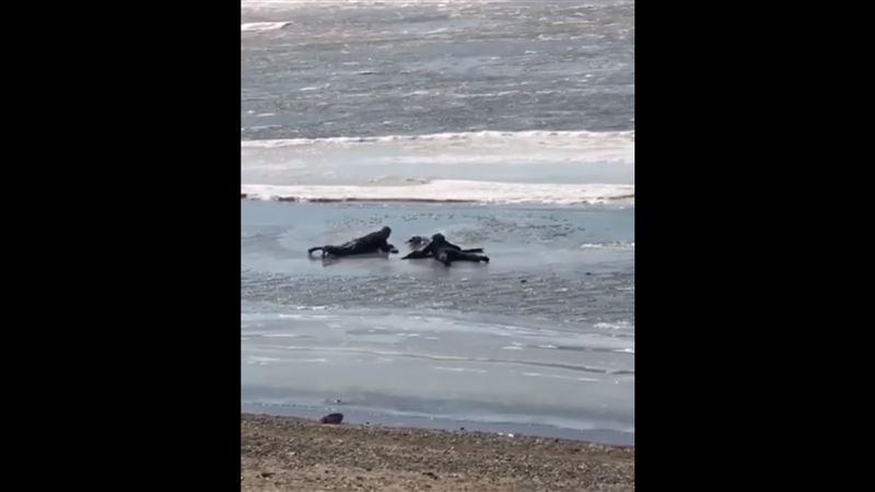 Прохожие спасли собаку, которая провалилась под лед