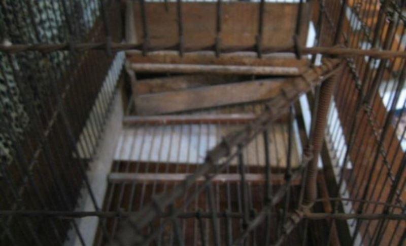 20 жыл бойы баласын торда қамап ұстаған
