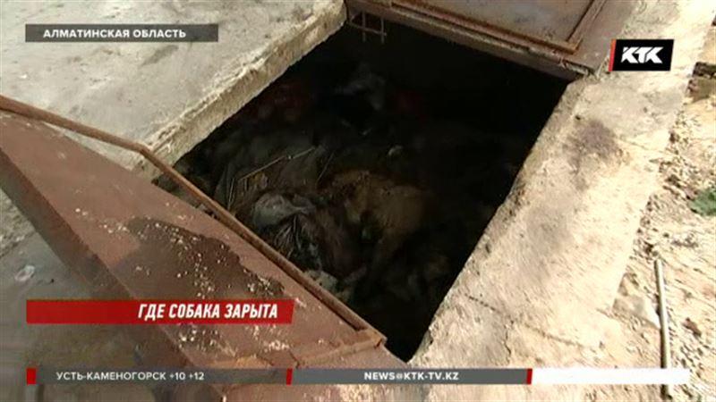 Страшную находку обнаружили в Алматинской области зоозащитники
