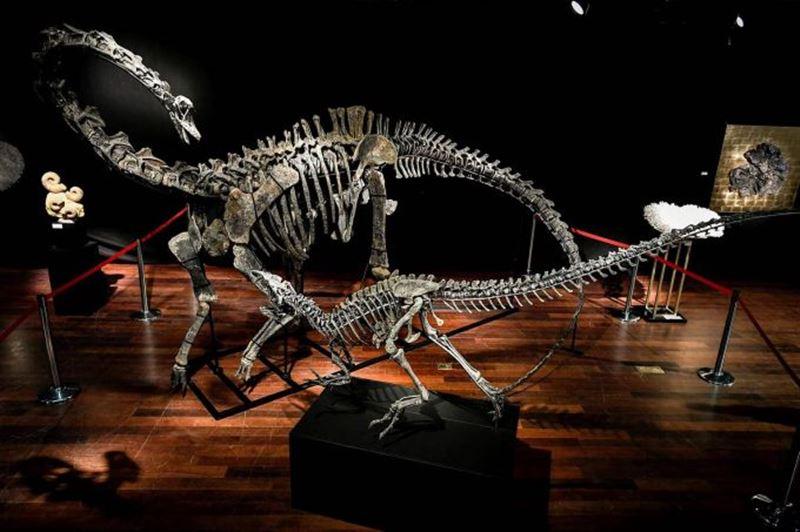 В Париже почти за 2,5 миллиона евро продали скелеты двух динозавров
