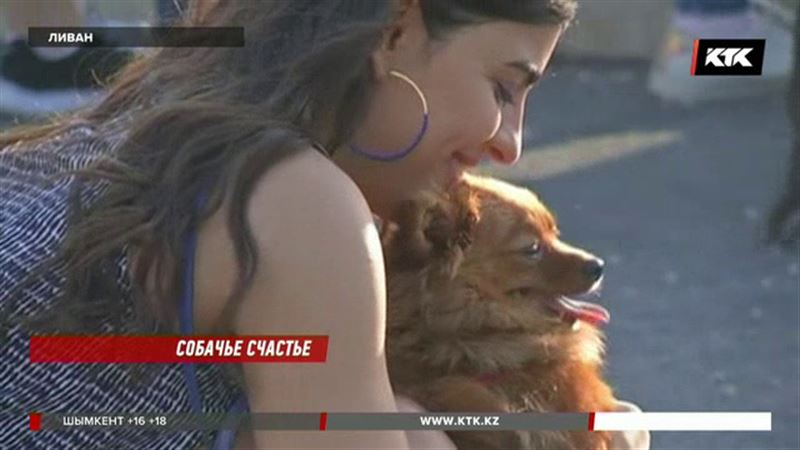 Первый собачий фестиваль прошел в Ливане