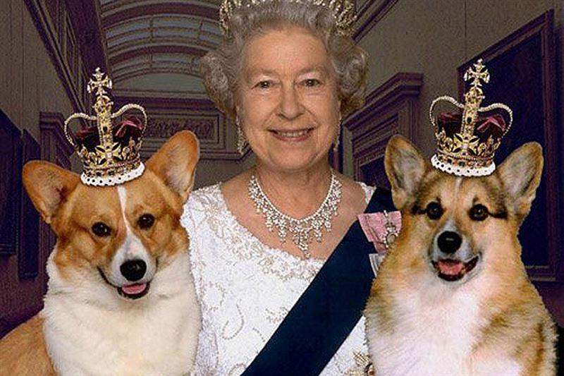 В Великобритании умер последний корги королевы Елизаветы II