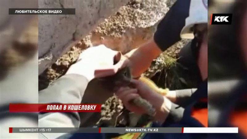 Упитанный кот заставил поволноваться карагандинских спасателей