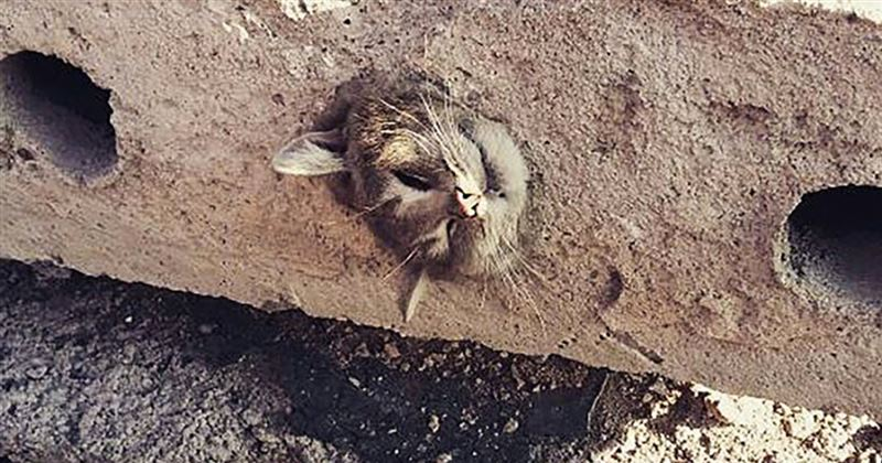 ВИДЕО: Құтқарушылар бетонда қалып қойған мысықты сыртқа шығарды