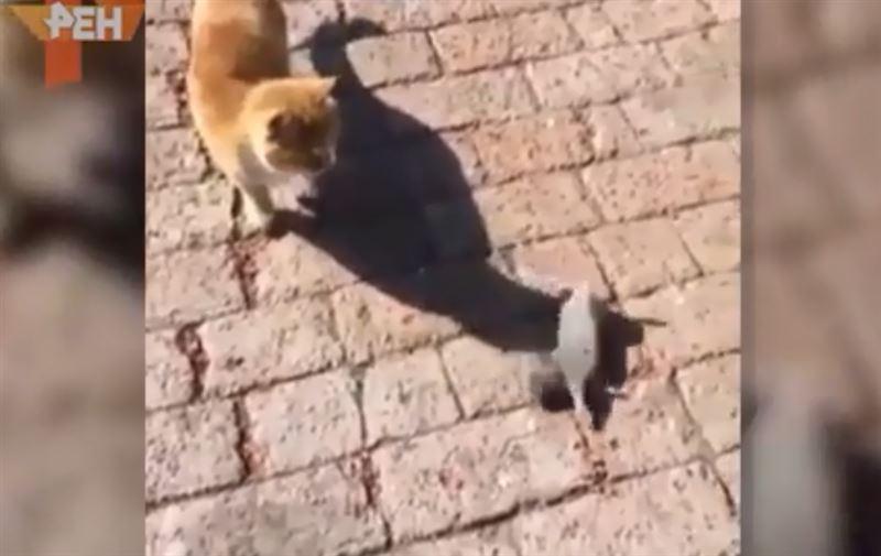 Пользователей Сети позабавило видео с «мертвой» крысой, укатившейся от кота