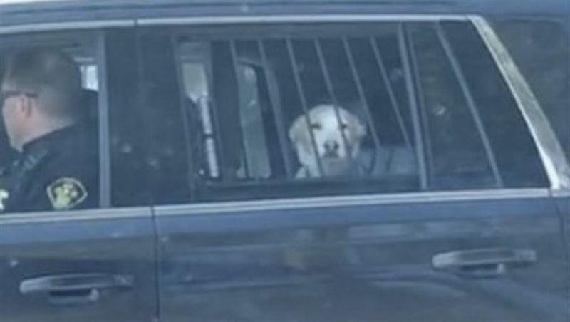 Пса «арестовали» за охоту на оленя, и его фото стало вирусным