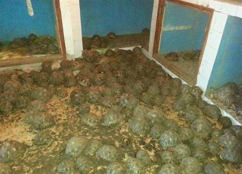 Порядка 10 000 черепах обнаружили из-за невыносимого запаха в двухэтажном доме