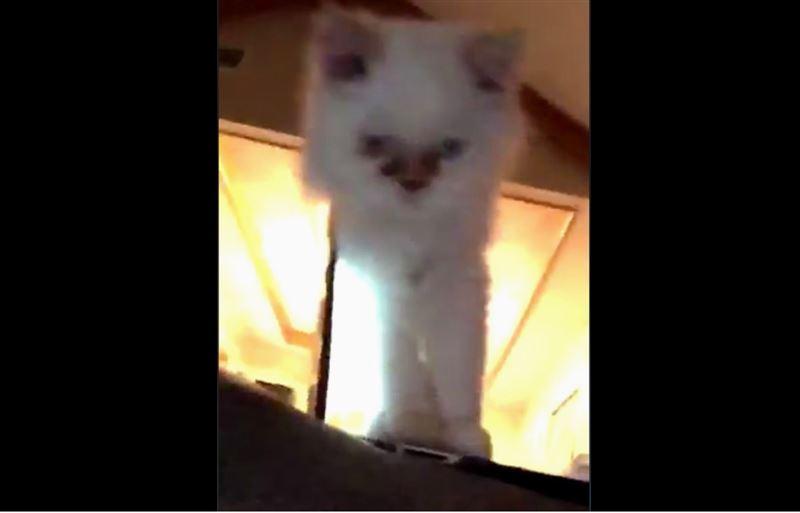 Пользователей Сети насмешил кот, упавший вместе с ноутбуком