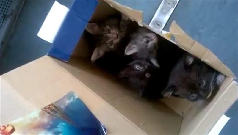Пассажиров электрички эвакуировали из-за коробки с котятами